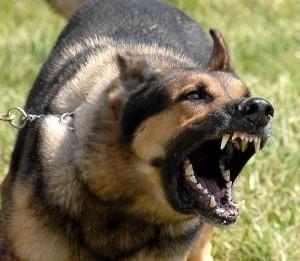 dog-barking